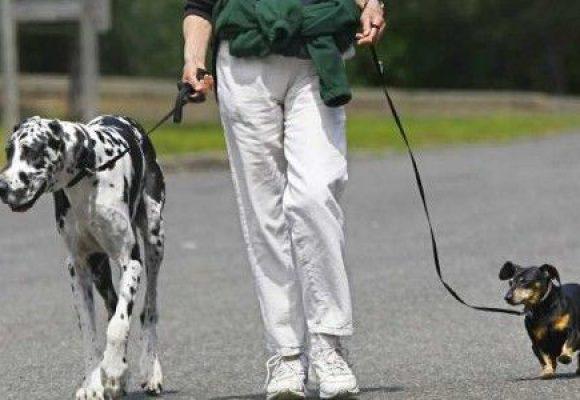 Més excrements de gossos en els carrers d'Alcoi durant l'alerta