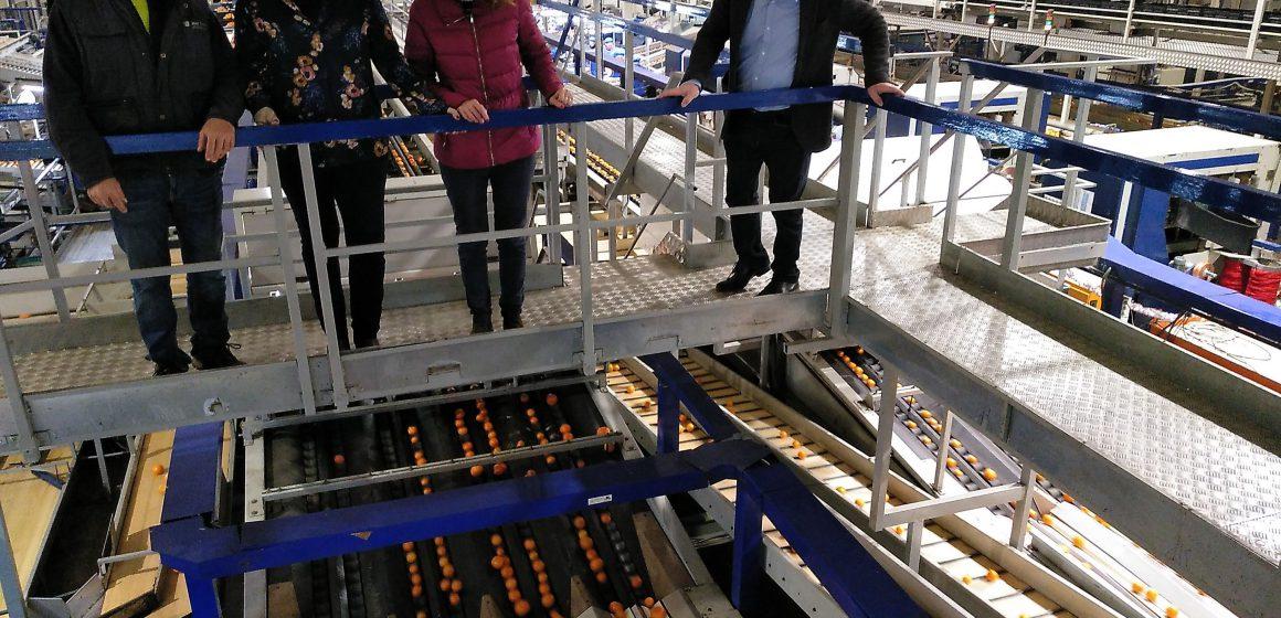 Xeresa impulsa una plataforma en defensa de la taronja en la Safor