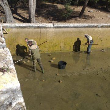 Alzira retira les carpes exòtiques que envaïen les basses de la Murta