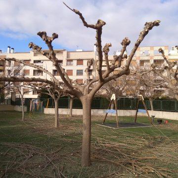 Ontinyent protegeix més de 2.000 arbres en un pla de poda per a 2020