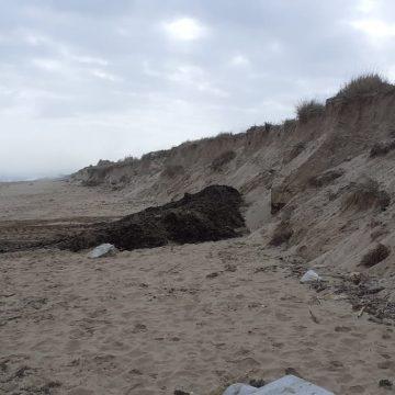 Oliva regenera en posidònia les dunes danyades per 'Glòria'