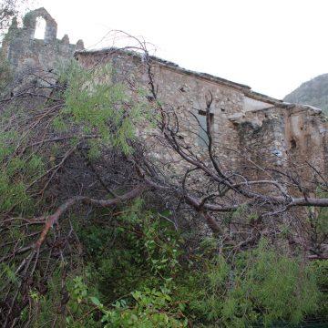 Alzira retira els arbres que han danyat el Monestir de la Murta
