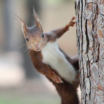 Alzira recull en un catàleg les més de 160 espècies d'animals vertebrats del municipi