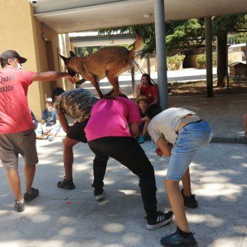 La pionera Escola d'Estiu «Amics Peluts» d'Alcoi tanca hui el seu campus