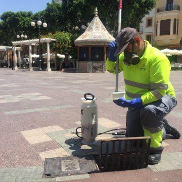 L'Ajuntament d'Alzira aprova una ordenança per al control del mosquit tigre amb rellevància per a la salut pública